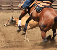 A rodeo horse roping a cow. A close up action photography image of a rodeo horse and cowboy roping a cow Stock Photos