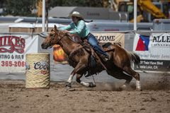 Barrel Racing on a Sunday Afternoon. A barrel racer riders her horse and cuts a turn to kick up a lot of dirt. The rodeo in Cottonwood, California is a popular royalty free stock photo