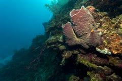 Barrel sponge. Goant barrel sponge underwater off the coast of Roatan Honduras Royalty Free Stock Photos