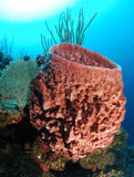 Barrel sponge Royalty Free Stock Photography