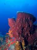 Barrel sponge Stock Photo
