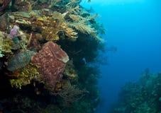 Barrel sponge in coral crack Royalty Free Stock Image