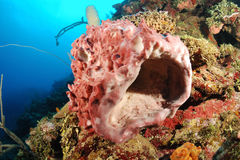 Barrel sponge in coral reef Stock Image