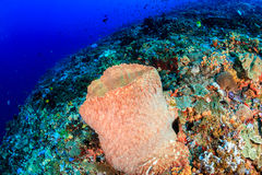 Barrel sponge on a coral reef Stock Photography