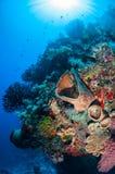 Barrel sponge, feather stars, black sun coral in Banda, Indonesia underwater photo Royalty Free Stock Photos