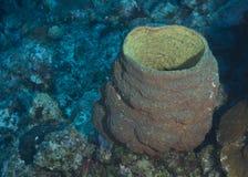 Barrel Sponge Stock Images
