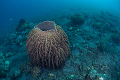 Barrel Sponge Stock Photography