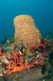 Barrel Sponge and Organ Pipe Sponge Royalty Free Stock Photography