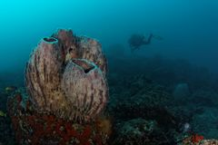 Barrel sponge at Ras Korali Stock Image