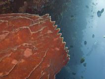 Barrel Sponge1 Stock Image