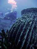 Barrel sponge scuba diver philippines Stock Photos