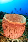 Barrel sponge with SCUBA divers. Turtle resting on a barrel sponge on a tropical coral reef with a sunburst behind Stock Photography