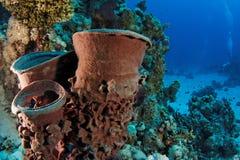 Barrel sponge - St John's reef Egypt Stock Photography