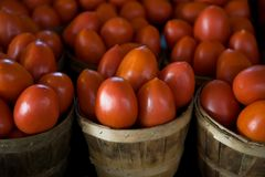 Barrels of juicy fresh tomatoes Stock Photography