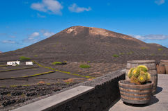 Barrels at Lanzarote Vineyards Stock Image