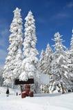 Barrels in snow under fir Stock Photography
