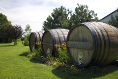 barrels stor wine Royaltyfri Fotografi