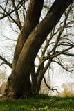 Barrels of trees Royalty Free Stock Photo