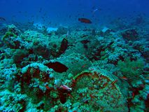 Barrels underwater Royalty Free Stock Image