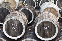 Barrels of wine royalty free stock images