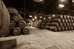 Barrels in the wine cellar Stock Images