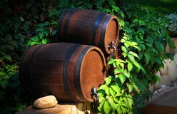 Barrels of wine in the green grass. Sun-lighted barrels for home-made wine in the summer garden royalty free stock photos