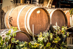 Barrels for wine, Tura Winery, Israel. Wooden barrels for wine in the courtyard of the Tura Winery, Israel Stock Images