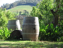 Barrels in Winelands. Wine barrels in the Franschhoek wine valley in Cape Town, South Africa Royalty Free Stock Photo