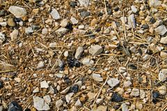 Barren arable land. Barren land: arable soil with lots of cobbles, mostly limestone and flint royalty free stock photo