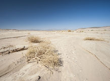 Barren desert landscape in hot climate Royalty Free Stock Photo
