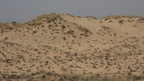 Barren desert with sand. An outdoor scene in nature stock video