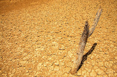Barren Desert Wasteland. Cracked and parched earth in a dry desert wasteland Royalty Free Stock Photography