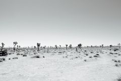 Barren Desertscape Stock Photography