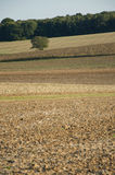 Barren Field Besides a Forest Royalty Free Stock Photos
