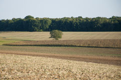 Barren Field Besides a Forest Stock Photo
