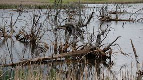 Barren habitat Stock Image