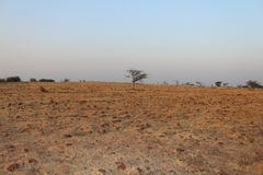 Barren land. Of a east hemisphere of earth Stock Images