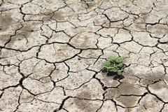Barren land at summer Stock Photo