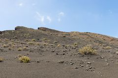 Barren Landscape. In the Timanfaya National Park with a few plants in the lava stock image