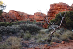 Kings Canyon Landscape Royalty Free Stock Images
