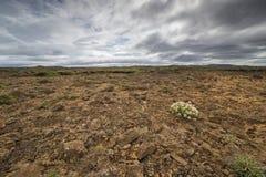 Barren landscape Stock Photography