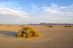 Barren Mojave Desert Royalty Free Stock Photo