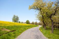 Barren Road Through Summer Landscape on Czech Countryside Stock Image
