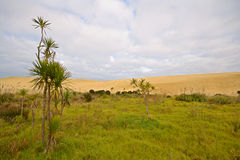 Barren sand dunes and green meadows Stock Photography