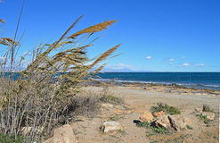 A Barren Sea View Past The Reeds. Royalty Free Stock Photos