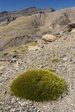 Barren slopes in Sierra Nevada National Park Royalty Free Stock Image