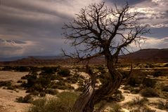 Barren southwestern tree Royalty Free Stock Photography