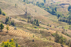 Barren terraced rice field Royalty Free Stock Images