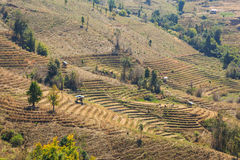 Barren terraced rice field Royalty Free Stock Photos