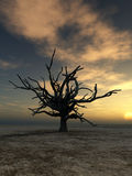 Barren Tree 20. An image of a dead tree within a barren wilderness landscape, whilst the sunsets or rises in the background Royalty Free Stock Photos
